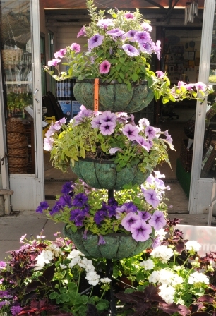 basket stand with purple petunias